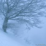 mist sneeuw gr 20