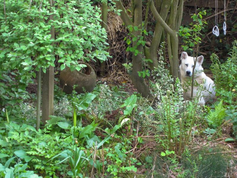 Thuis in de tuin!