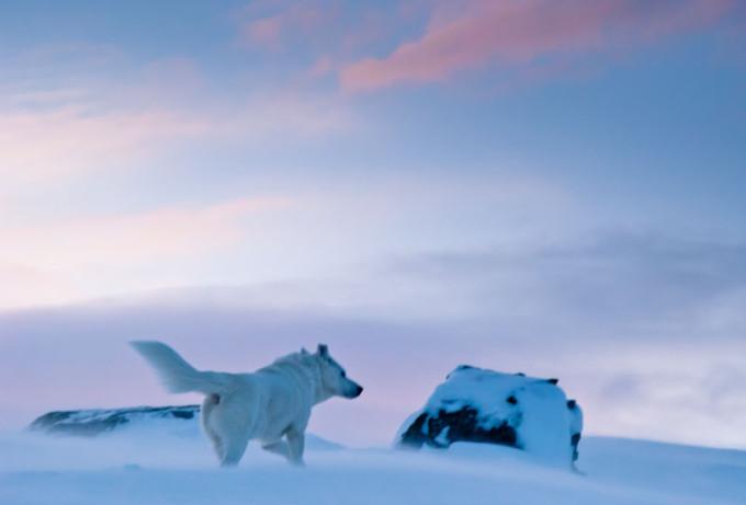 Op ski's door Zweeds-Lapland