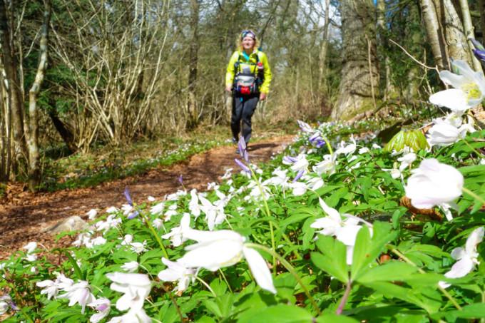 Dag 12 – Offa's Dyke Path