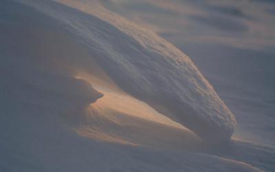 Sneeuwkrul